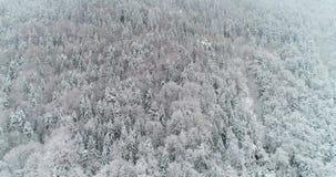 Вид с воздуха леса со снегом в montain акции видеоматериалы