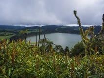 Вид с воздуха на ландшафте с голубым зеленым озером Lagoa das Furnas кратера с цветками и покрытой мхом растительностью Sao стоковые изображения