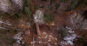 Внося в журнал тележка нагруженная со свежо пиломатериалами управляет вдоль дороги леса в taiga среди валить деревьев акции видеоматериалы