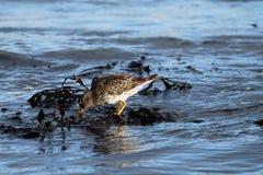 Выноситель Seashore стоковые фотографии rf