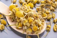 Высушенные цветки стоцвета в деревянной ложке на серой плите стоковое фото