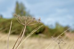 Высушенный цветок на холме стоковые фотографии rf