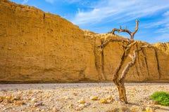 Вычурно изогнутое дерево стоковая фотография rf