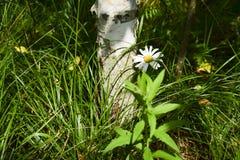 В лесу Royalty Free Stock Image