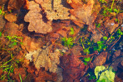 Вackground .Brown and green leaves under the blue ice. royalty free stock image