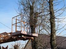 Воздушная рабочая платформа против фона обнаженных деревьев осен-весн-зимы, крыши и голубого неба, никто Pollarding деревья в стоковая фотография rf