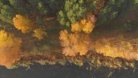 Воздушный взгляд сверху: летание над лесом и озером красивой осени ярким на солнечный день видеоматериал