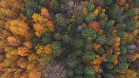 Воздушный красочный лес осени с желтыми оранжевыми зелеными деревьями видеоматериал