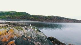 Воздушный ландшафт северной природы осени Полуостров Kola в России около городка Kandalaksha сток-видео