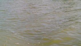 Волна моря от моторной лодки видеоматериал