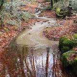 Вода в лесе стоковые изображения rf