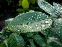 вода макроса листьев 4 падений предпосылки голубая стоковые изображения rf