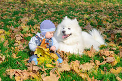 Вoy is sitting with a white dog Royalty Free Stock Photography