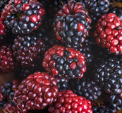 �unch of wild berries Royalty Free Stock Images