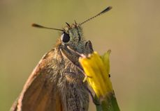 Ð'utterfly on the flower. Ð'utterfly on the grass. Macro photo. seen facet on the eyes royalty free stock photography