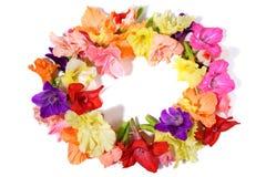 Гавайский венок - венок цветка стоковое фото rf