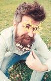 Гай смотрит славно с цветками маргаритки в бороде Концепция Photosession Человек с бородой и усиком, defocused зеленым цветом стоковые изображения rf