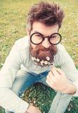 Гай смотрит славно с цветками маргаритки или стоцвета в бороде Концепция весеннего времени Человек с длинными бородой и усиком стоковые фото