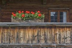 Гераниумы балкона стоковая фотография rf