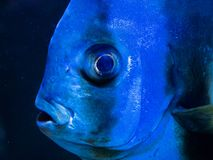 Глаз рыб стоковые изображения