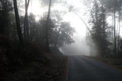 Густой туман вдоль дороги стоковые изображения rf
