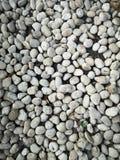 Гравий камешков аранжированный, что в саде украсить предпосылку земной картины стоковая фотография