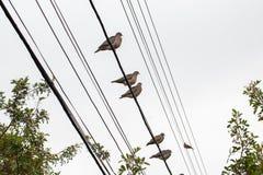 Голуби на электрическом проводе на пасмурный день стоковые фотографии rf