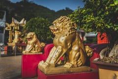 Гонконг, ноябрь 2018 - 10 тысяч человек жирное Sze монастыря Buddhas стоковое изображение