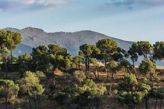 Гора популярно вызвала Мертв Женщину в Сеговии расположена в национальном парке Guadarrama на переднем плане Pinarillo стоковое фото