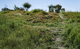 Горный склон в Negev предусматриванном в красных ветреницах стоковые фото
