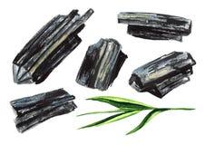 Естественный деревянный уголь с зеленым набором стержня Иллюстрация акварели нарисованная рукой изолированная на белой предпосылк иллюстрация штока