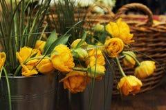 Желтые пионы цветков в ведре, красивых букетах, дождевых каплях и росе, предпосылке стоковые фото