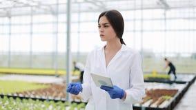 Женское аграрное enginee с планшетом идя вдоль государства парника, рассматривать заводов и проходя фермой видеоматериал