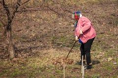 Женщина извлекает листья от почвы в саде стоковые изображения rf