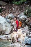 Женщина идет с 2 кавказскими собаками чабана в лесе стоковое изображение rf