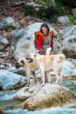 Женщина идет с 2 кавказскими собаками чабана в лесе стоковое фото rf
