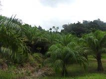 Живописное и зеленое обнаруженное местонахождение скрепление Jame острова Ko Tapu в заливе Таиланде Phang Nga стоковые фото