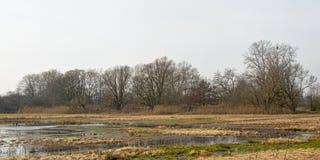 Заболоченные места зимы с обнаженными деревьями стоковая фотография rf