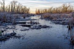 Замороженный поток болота стоковая фотография rf