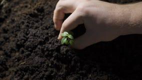 Засаживающ молодое дерево ребенк вручите на задней почве как забота и сохраньте концепцию пустоши видеоматериал