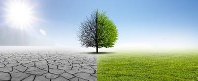 Засуха и зеленая природа стоковые изображения rf