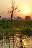 Заход солнца в перепаде Okavango стоковая фотография