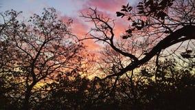 Заход солнца лета за деревьями стоковое фото rf