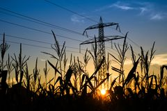 Заход солнца на кукурузном поле с красочным голубым небом стоковые фото