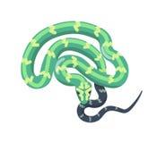 Зеленая змейка изолированная на белой предпосылке Тропический безногий гад, ядовитый хищник, дикое плотоядное животное Горжетка и бесплатная иллюстрация