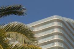 Зеленая пальма на предпосылке голубого неба и современное здание с космосом для текста стоковая фотография