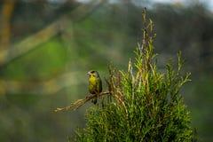 Зеленая птица на ветви биографической стоковое фото rf