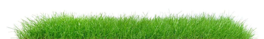 Зеленая трава - панорама стоковое изображение rf