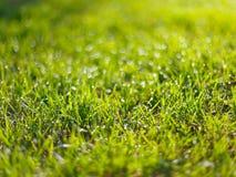 Зеленая трава с дождем падает предпосылка весны стоковая фотография rf