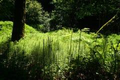 Зеленая расчистка в середине леса, область San Francisco Bay, Калифорния стоковые изображения
